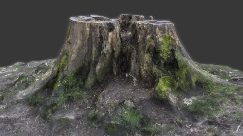 TALOS 3D Scan Store Tree Stump