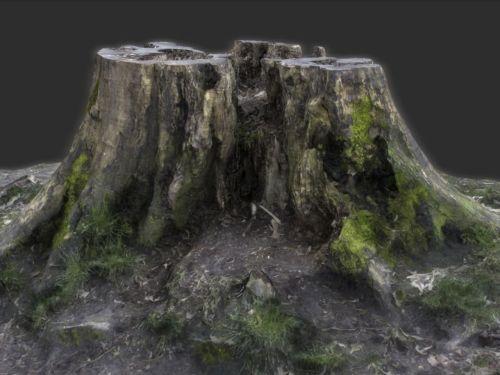 TALOS 3D Scan Store Tree Stump Model