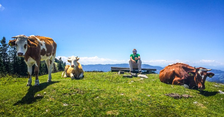 A man sitting on a wooden bench next to three cows in the Slovenian mountains
