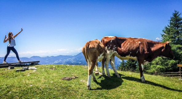 A woman posing next to two cows in the Slovenian mountains