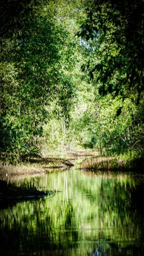 Suriname Swamp Tour