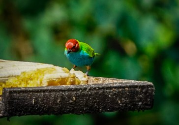 A colorful bird eating