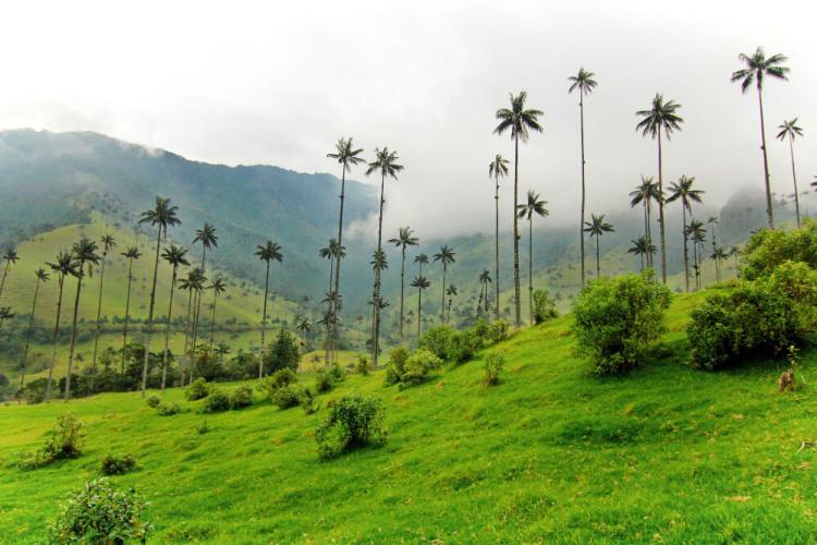 Valle de Cocora in Colombia