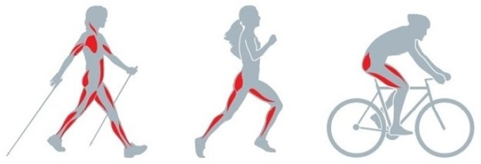3 illustrations of the used muscles while walking, running and bicycle riding