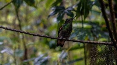 Green bird sitting on a twig