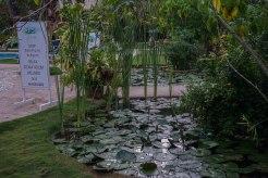tropic pond