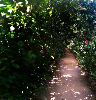 walkway at the Dominican Treehouse Village