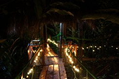 Treehouse path at night