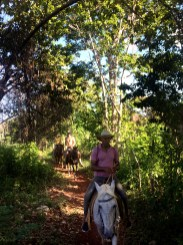 three people riding horses in the forest