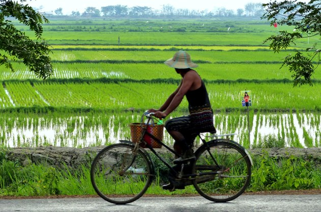 A man riding a bicycle in Dhala and Twante, Myanmar in Southeast Asia