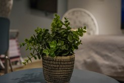 a plant on a table
