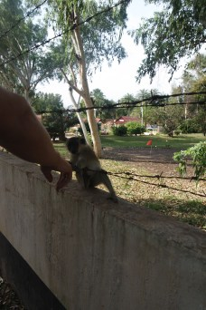 Ben and a monkey