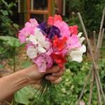 Garden-0219