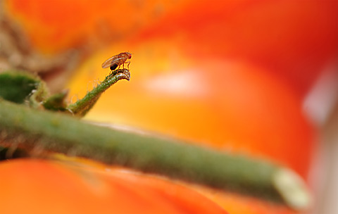 Fly_Redprofile_480