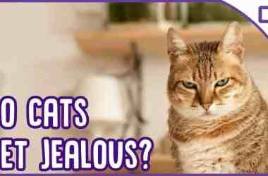 Jealousy in Cats