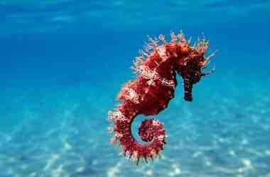 Sea Horse Critters