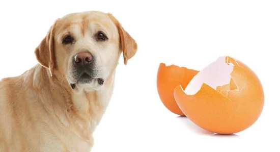 Eggshells to Dogs