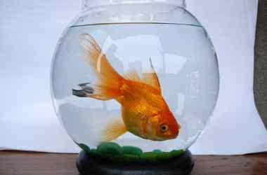 Small Fish Bowl