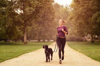Dog Breeds for Fitness Enthusiasts