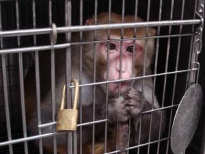 kosmetik cruelty free thetasprojects