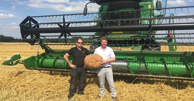 Harvest Time: 100% Irish Wheat for The Natural Bakery's Grain Project