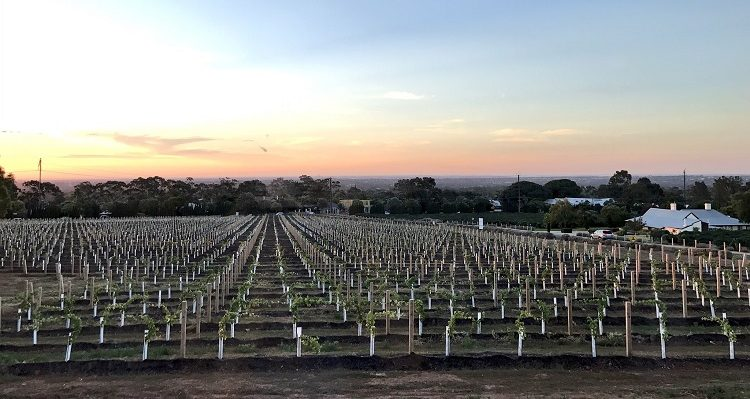 Penfolds Wines Tour with Emirates