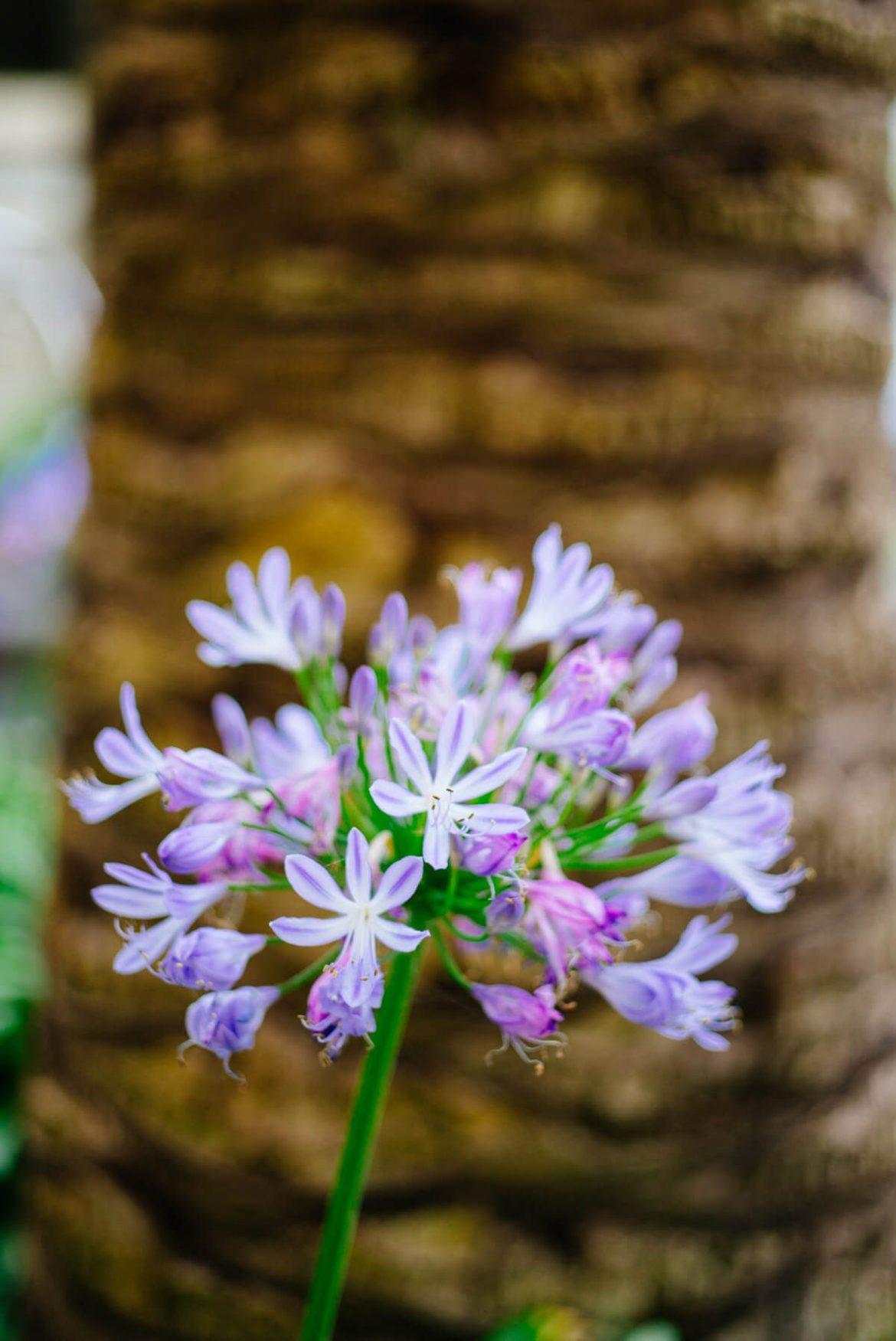 Flowers at The Ritz-Carlton Half Moon Bay