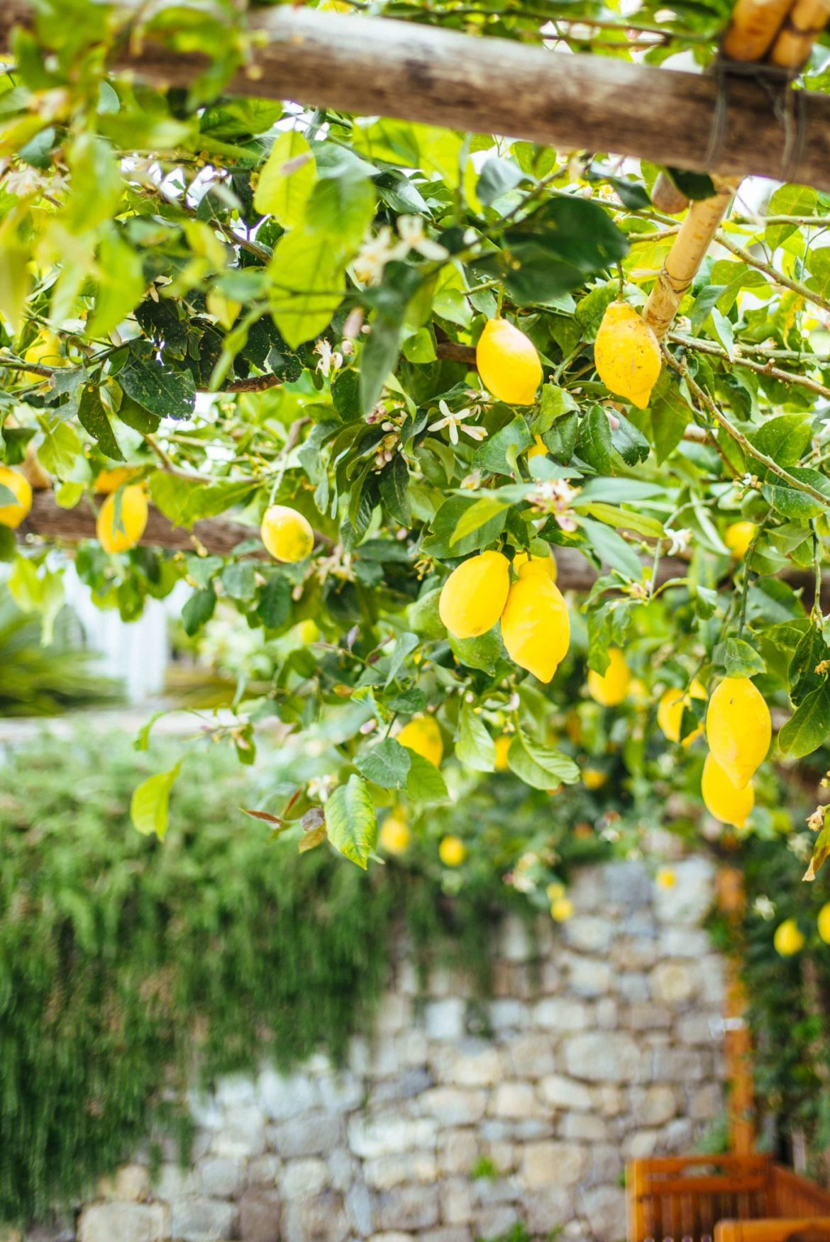 lemon trees by the pool at Casa Angelina Lifestyle Hotel in Praiano Italy, The Taste Edit