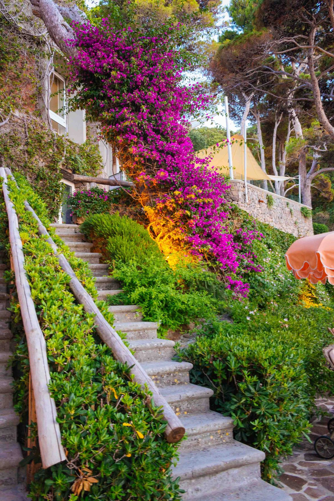 Beautiful bougainvilleas at the best hotel in Ischia the Mezzatorre Thermal Spa, Photo by The Taste Edit and Sarah Stanfield