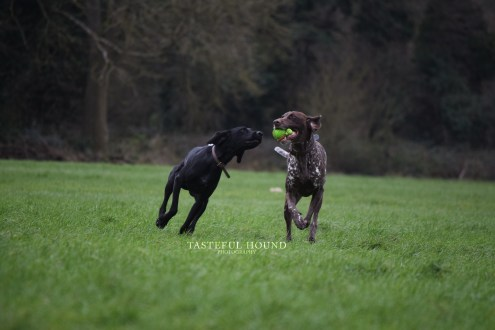 Luna and Borris, Pointers