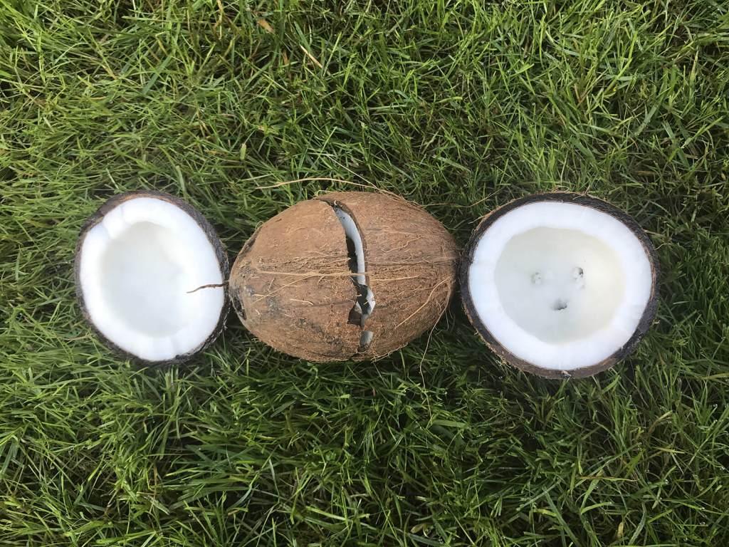 Jak otworzyć kokosa