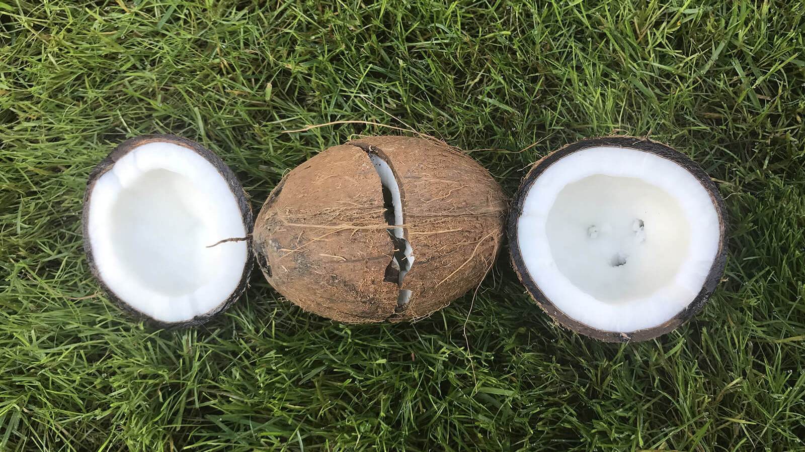 How to open a coconut? – advice for men and women