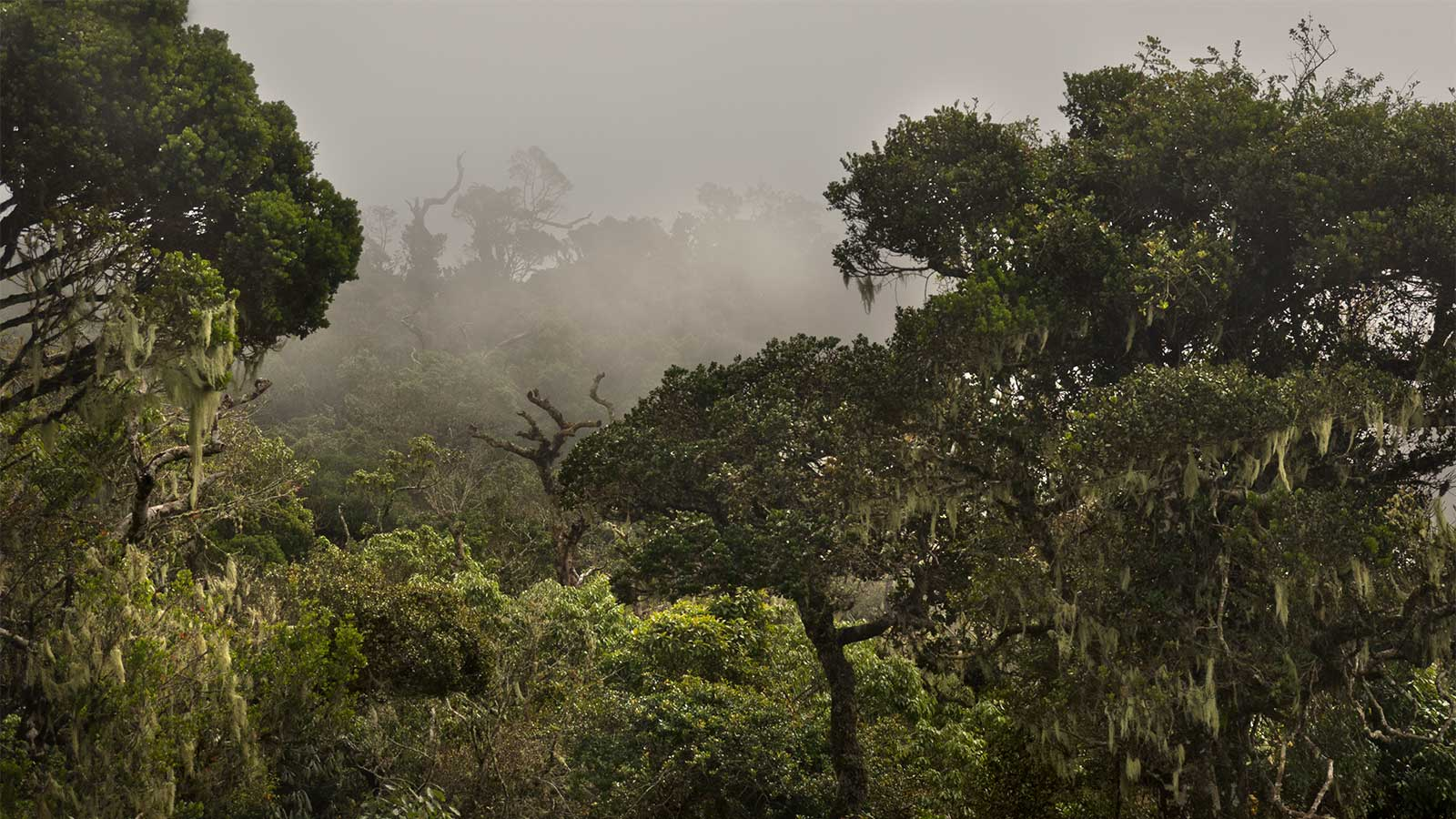 Leave only footprints in Horton Plains