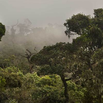 Horton PLains , Sri lanka