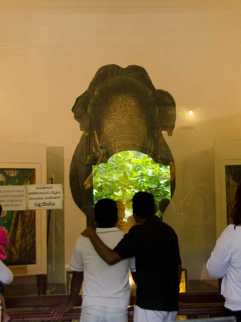 Świątynia Zęba w Kandy, Muzeum słonia Raja