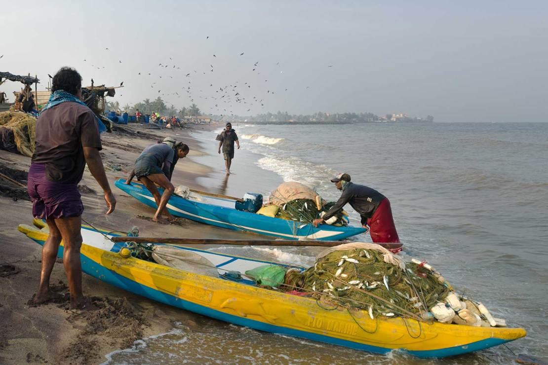 Fish Market, Negombo, Sri lanka