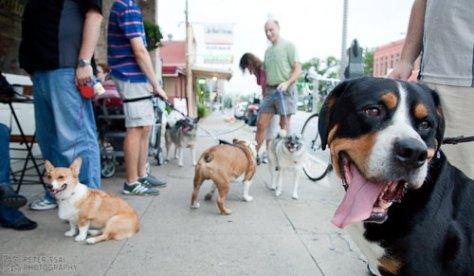 Austin Cupcake Smackdown Pre Party - Doggies outside of Walton's