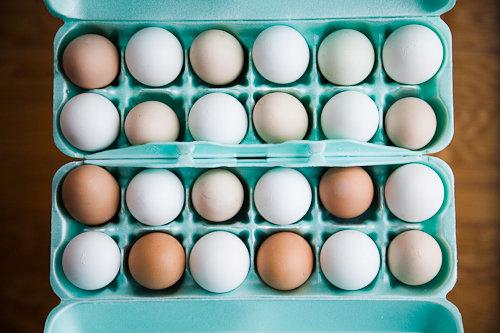 Farm Fresh Eggs vs Conventional Factory Farm Eggs – a Photographic Comparison