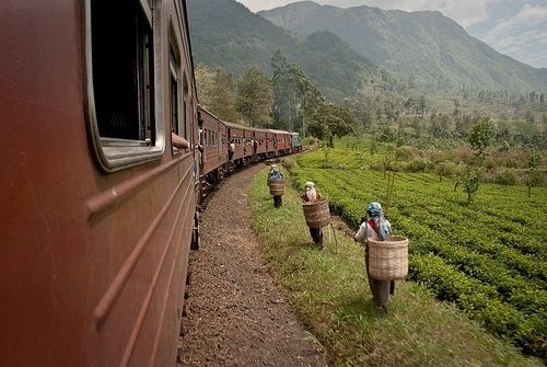 sri lanka train tea