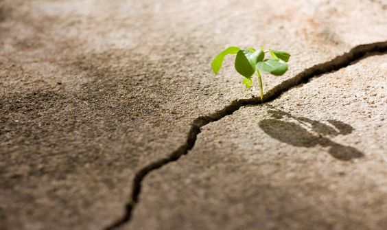 grow in sidewalk