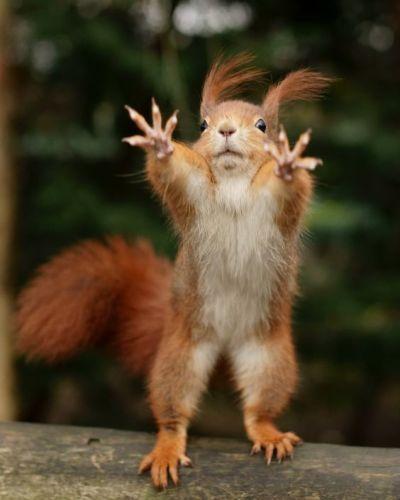 squirrel, hug