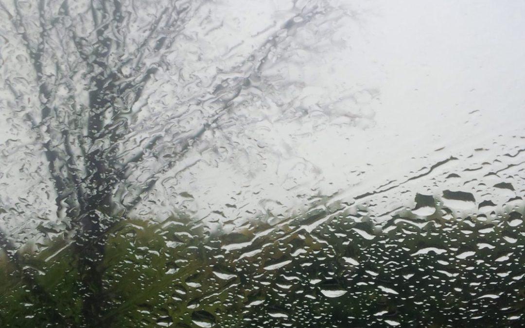 Wordless Wednesday: A wee bit wet Wednesday