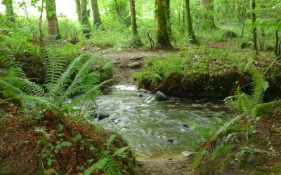 Wordless Wednesday: The woodland stream