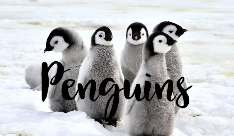Penguin Resources for the Classroom