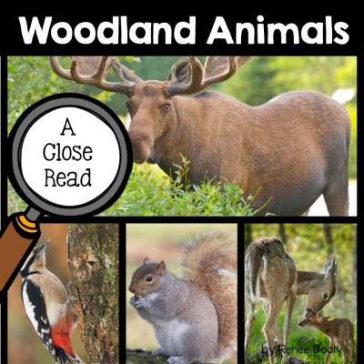 woodland-animals-close-read
