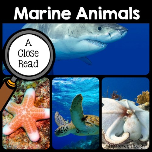 marine-animals-close-read