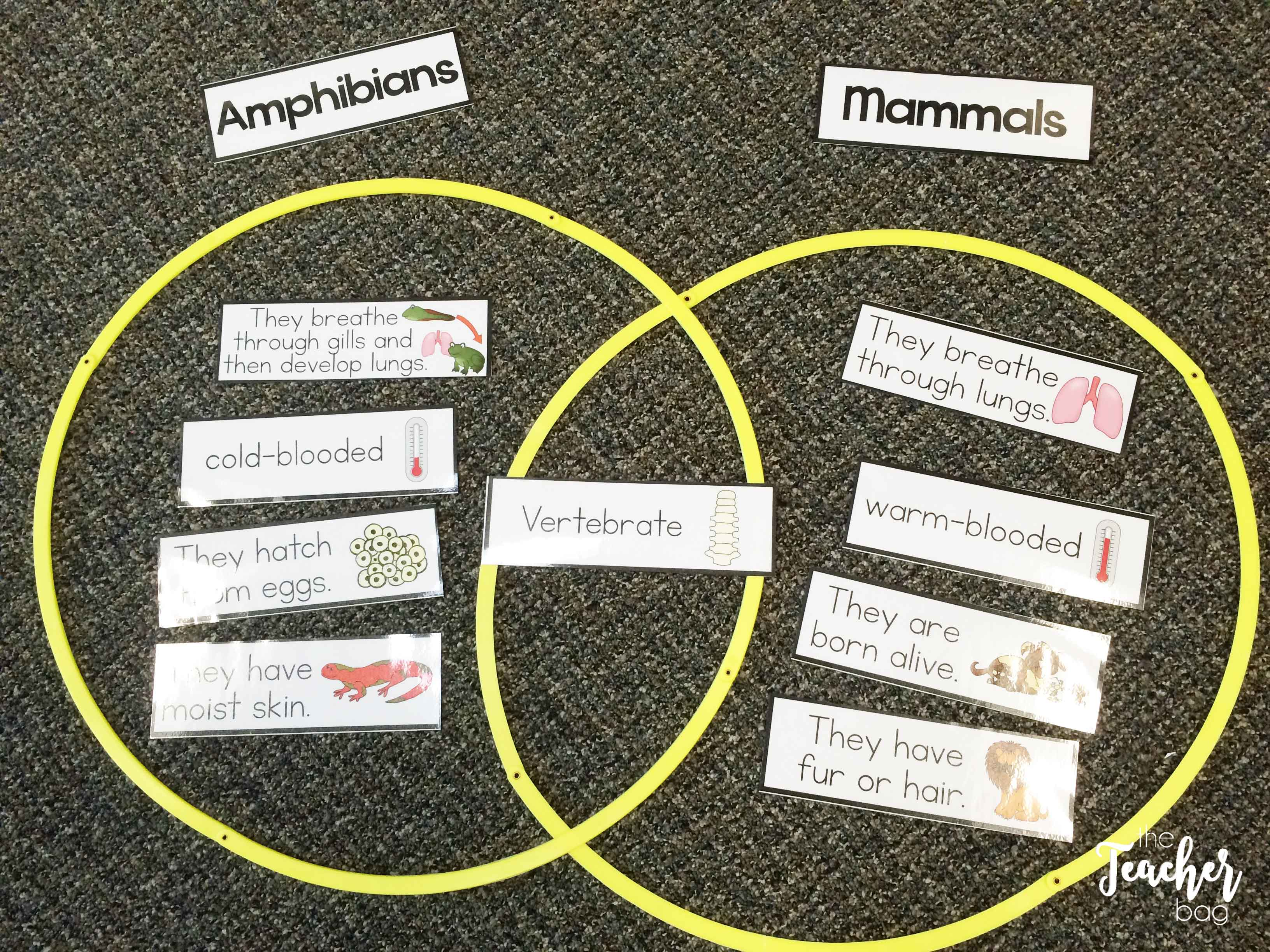 Use hula hoops for sorting or venn diagrams.