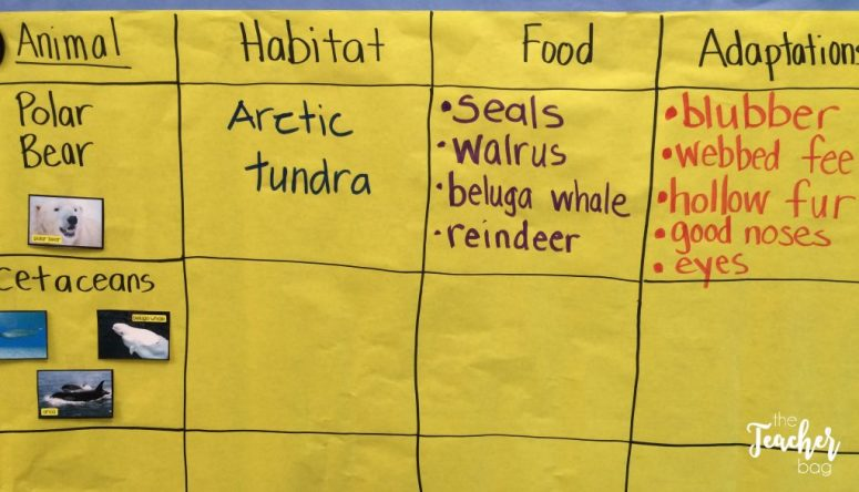 comparing polar animals