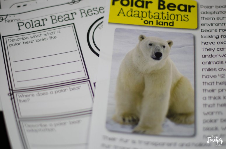 polar bear nonfiction articles