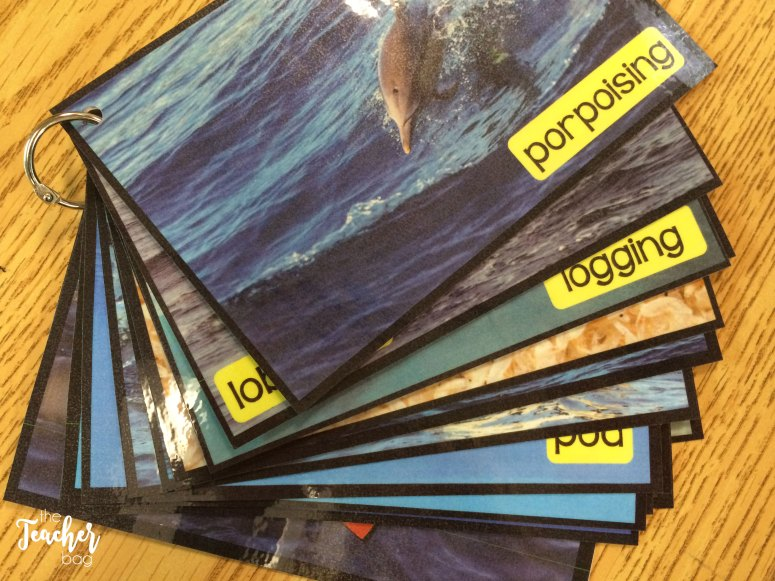 whale and dolphin picture vocabulary cards